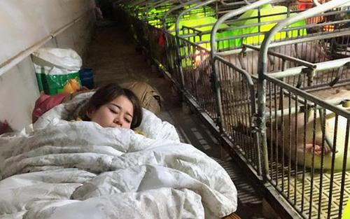 Xiao Fang ngủ cạnh chuồng lợn. Ảnh: Peoples Daily