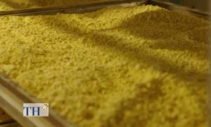 Kỹ thuật sấy tinh bột nghệ nhằm giữ tối đa curcumin