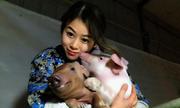 Cô gái nuôi hơn 400 con lợn nổi tiếng mạng xã hội Trung Quốc