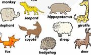 Tên gọi các loài động vật có vú trong tiếng Anh