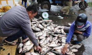 Bắt hàng tấn cá mè khi hồ thủy lợi xả nước