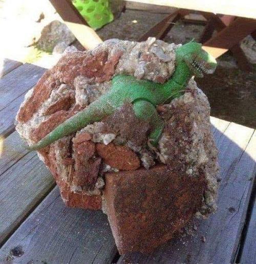 Phát hiện xác khủng long hóa thạch.