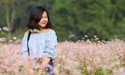 Đồng hoa tam giác mạch nở rộ ở Hà Nội