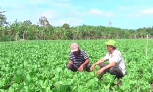 Nông dân ở Đồng Nai điêu đứng vì thương lái mua nông sản không trả tiền