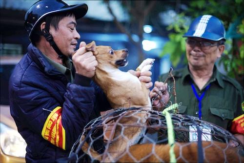 Đội bắt chó thả rông của quận Thanh Xuân, Hà Nội. Ảnh: Tất Định