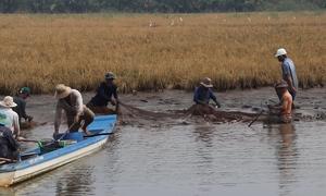 Nông dân Tiền Giang thu 100 triệu mỗi năm nhờ luân canh lúa và thủy sản