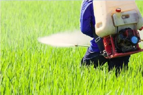 Thuốc bảo vệ thực vật có vai trò quan trọng trong việc đảm bảo an linh lương thực, năng suất cây trồng.