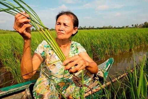 Người nông dân cần được cung cấp kiến thức đầy đủ về thuốc bảo vệ thực vật.