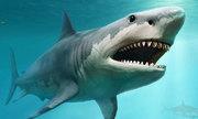 Cá mập thụ thai với nhiều con đực sao chỉ giữ một cặp phôi?