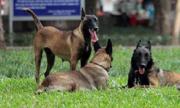 Quản lý gần 500.000 chó nuôi bằng phần mềm: Có khả thi?