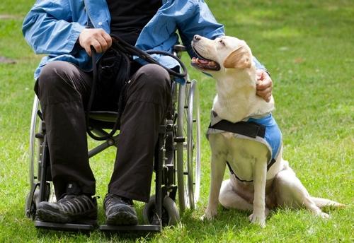 Chó hỗ trợ người tàn tật không bị giới hạn chiều cao. Ảnh: Antonio Gravante.