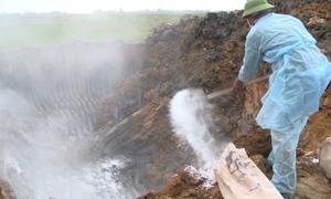 Hà Tĩnh tiêu hủy gần 100 con lợn lở mồm long móng