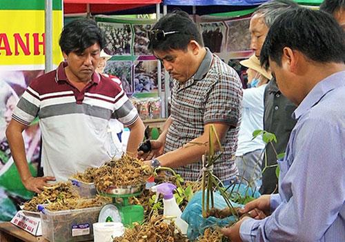 Sâm Ngọc Linh bày bán tại hội chợ.
