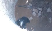 Hái tổ ong mật, gấu lợn rơi xuống giếng sâu 12 mét