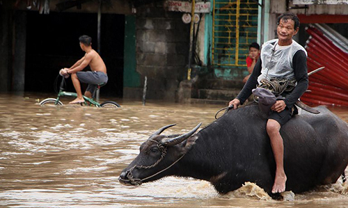 Một người đàn ông cưỡi trâu lội nước ở thị trấnBaao, tỉnh Camarines Sur hôm 30/12. Ảnh: AFP.