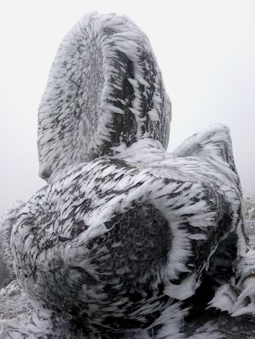 """<p class=""""Normal""""> Tảng đá cảnh băng bám tạo thành hình vảy cá uốn lượn. So với sáng 30/12, hôm nay băng bám dày hơn, phủ trên cả thảm cỏ.</p>"""