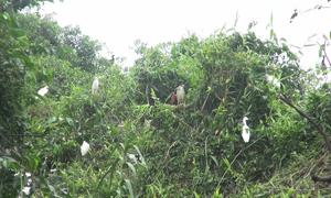 Vườn chim gần 32.000 m2 giữa lòng thành phố Cà Mau