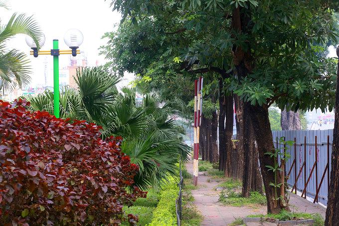 Gần 500 cây xanh ở thủ đô được đánh chuyển để mở rộng đường