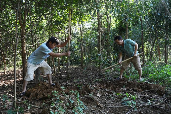 Nghề đào mối chúa kiếm tiền triệu mỗi ngày ở Thanh Hóa