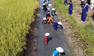 Du khách trải nghiệm bắt tôm, cá trên đồng ruộng ở Kiên Giang