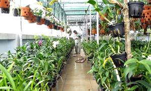 Vườn lan 500 m2 trồng trên sân thượng ở Sài Gòn