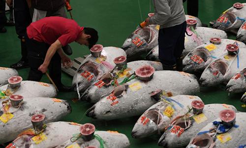 Cá ngừ tại chợ Toyosu sáng nay. Ảnh: AFP.