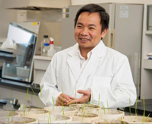 PGS Trần Đăng Xuân với các thí nghiệm về gene của cây lúa. Ảnh: Đại học Hirosima.