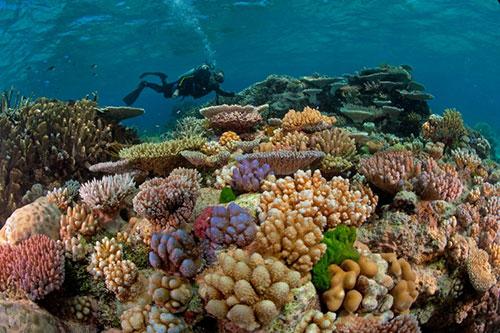 San hô dưới đáy biển. Ảnh minh họa: ST.