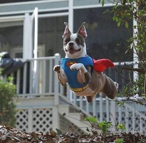 Super Dog là đây chứ đâu.