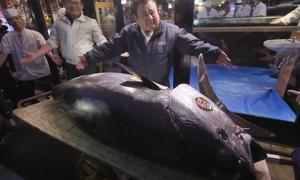 Con cá ngừ khổng lồ có giá 3,1 triệu USD tại Nhật Bản