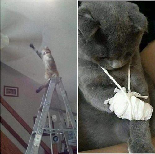 Mèo trả giá vì nghịch ngu.