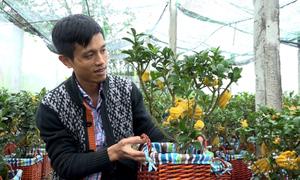 Chàng trai Hà Nội trồng phật thủ bonsai thu 2 tỷ đồng mỗi năm