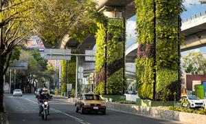 Mexico trồng 1.000 vườn cây thẳng đứng bằng phương pháp thủy canh
