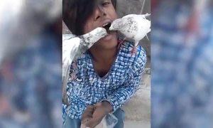 Chàng trai Ấn Độ để chim bồ câu mổ thức ăn trong miệng