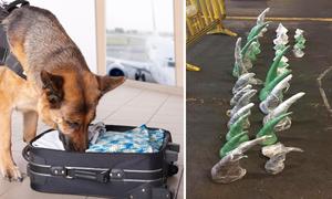 Chó cảnh sát phá thương vụ buôn lậu sừng tê giác 1,3 triệu đô