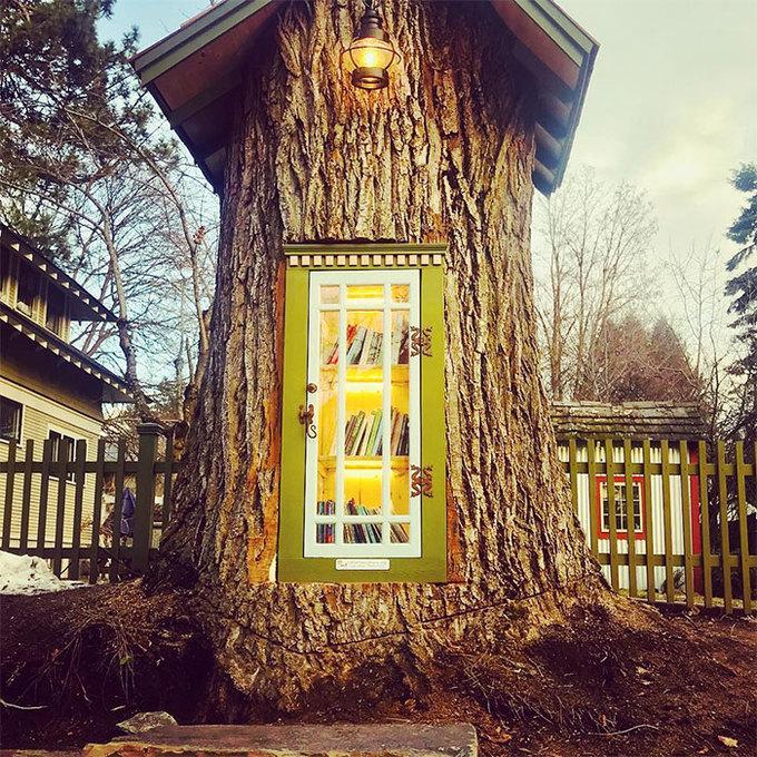 Thư viện nhỏ trong hốc cây trăm tuổi ở Mỹ