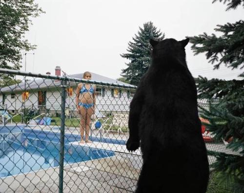 Ôi gấu đang nhìn mình kìa.