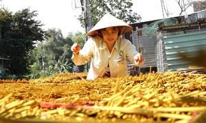 Làng nhang lớn nhất Sài Gòn tất bật trước Tết
