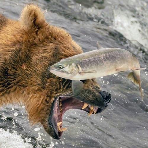 Đòn phản công của cá.