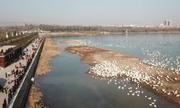 'Thành phố thiên nga' đón hàng nghìn chim di cư ở Trung Quốc