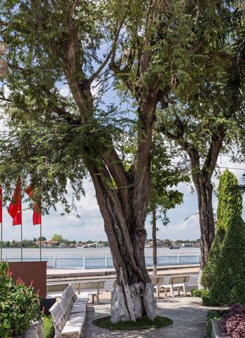Vị trí cây me hiện nay ở quảng trường của tỉnh Vĩnh Long. Ảnh: NVCC.