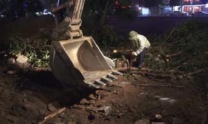 Hà Nội đánh chuyển cây trong đêm để mở rộng đường Láng