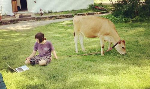 Ai bảo chăn bò là khổ, chăn bò sướng lắm nhé.