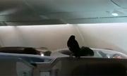 Chim sáo 'đi lậu' máy bay hạng thương gia từ Singapore sang London