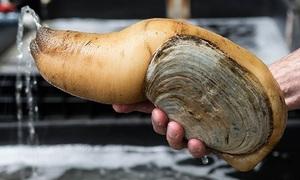 Tu hài Canada - đặc sản đắt giá từng bị ngư dân đổ bỏ