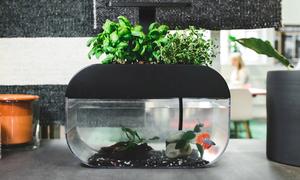 Chậu cây thông minh trồng rau nuôi cá 2 trong 1