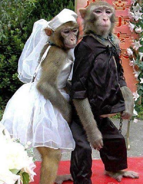Cô dâu, chú rể miền sơn cước.