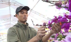 Thợ cắm hoa ở Hà Nội kiếm 5 triệu mỗi ngày vào dịp Tết
