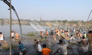 Người dân đổ ra đồng úp cá trong lễ hội tại Ấn Độ