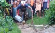 Hổ mang đất giết hụt rắn hổ bướm